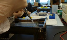 Loading DNA mixed with dye into an agarose gel in the Wayne lab.